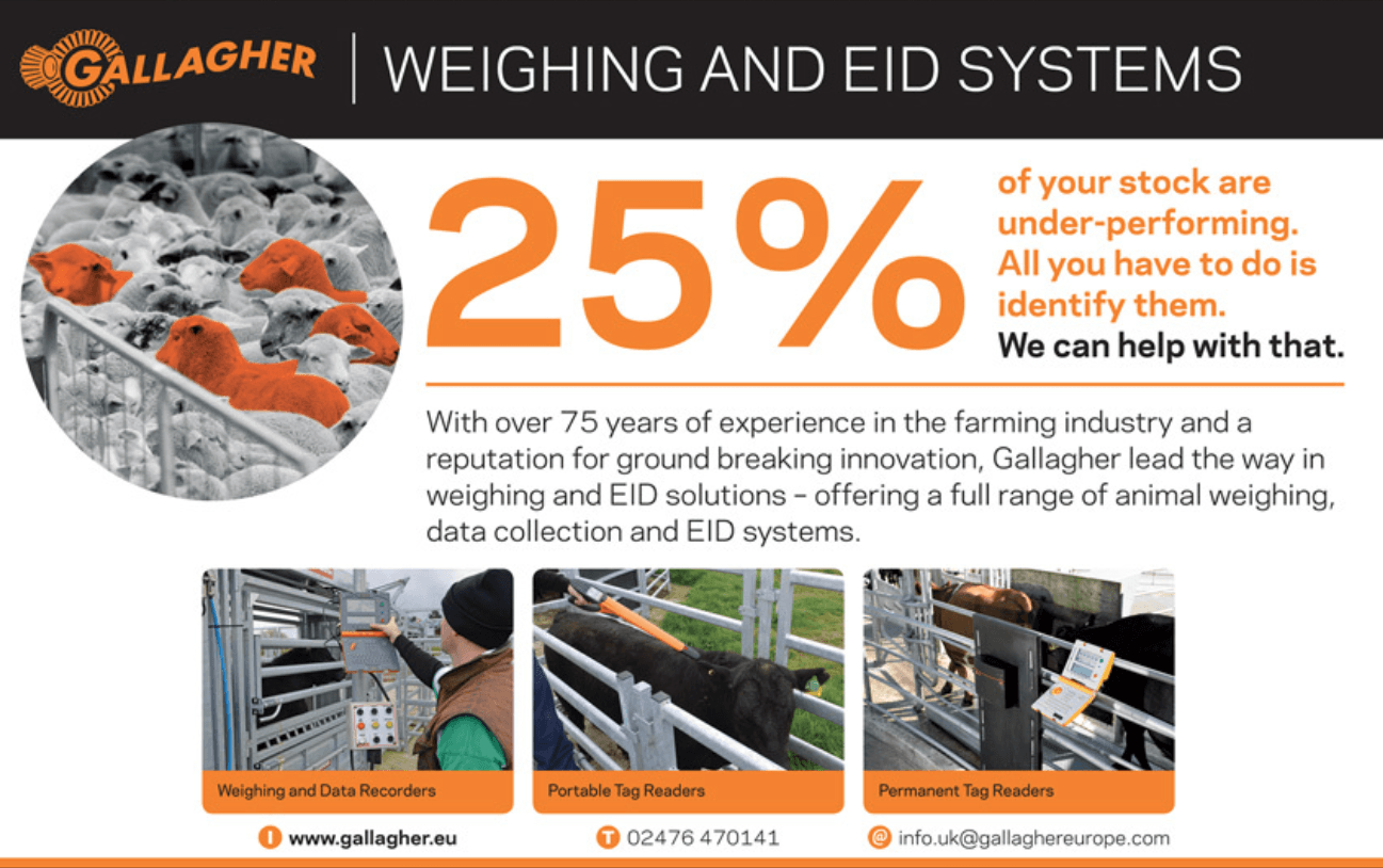 weighing and EID equipment