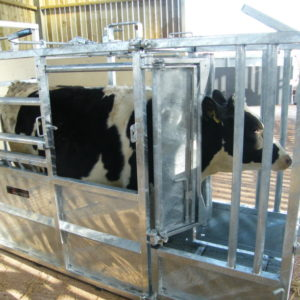 Bateman universal cattle crush