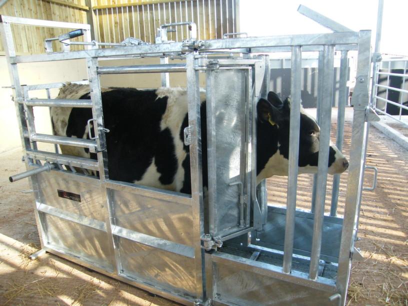 Bateman universal cattle crush